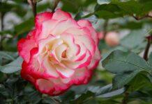 Perfumy o nietuzinkowej barwie jakie uczynią Cię szczęśliwszą